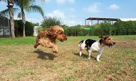 מעון יום לכלב בחוות הדוד משה
