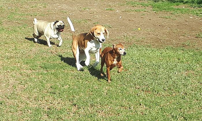 """5 אילוף כלבים בחוות הדוד משה, כפר טרומן, ליד נתב""""ג"""