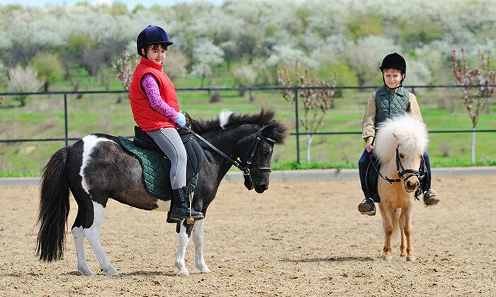 2 חוות מדבר יהודה - רכיבה על סוסים