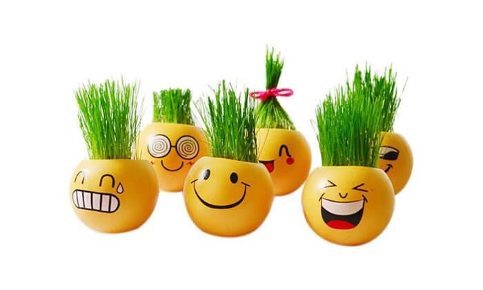 2 ראש דשא או ערכה להכנת צמחי תבלין