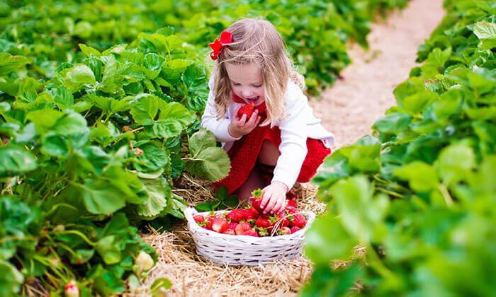 2 קטיף תותים או פרחים בצומת קדימה