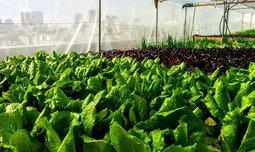 סדנה לגידול ירקות בבית
