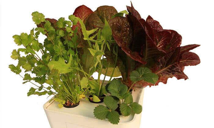 7 כרטיס לסדנה לגידול ירקות בבית