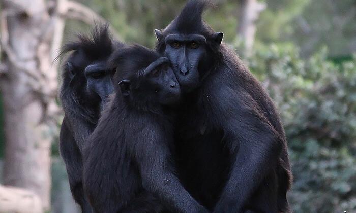 4 מקלט הקופים הישראלי - כניסה ופעילויות במרכז להצלה וחינוך ביער בן שמן