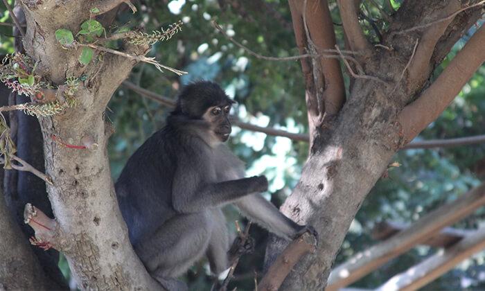 5 מקלט הקופים הישראלי - כניסה ופעילויות במרכז להצלה וחינוך ביער בן שמן