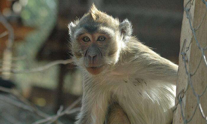 6 מקלט הקופים הישראלי - כניסה ופעילויות במרכז להצלה וחינוך ביער בן שמן