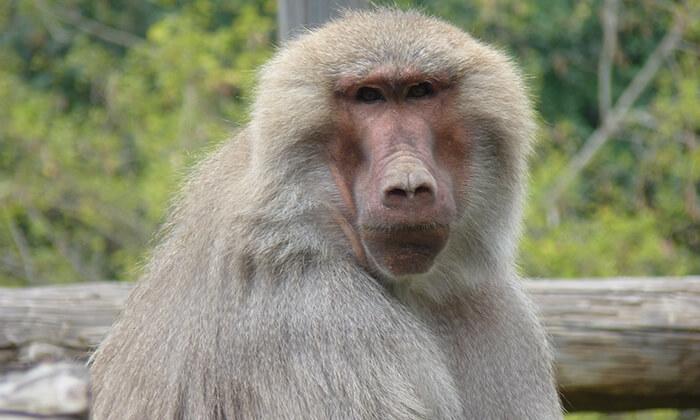 7 מקלט הקופים הישראלי - כניסה ופעילויות במרכז להצלה וחינוך ביער בן שמן