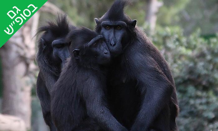 4 מקלט הקופים הישראלי - כניסה ופעילויות ביער בן שמן