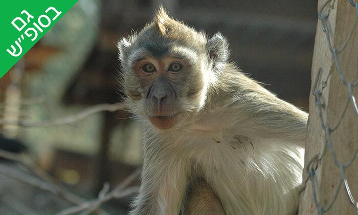 6 מקלט הקופים הישראלי - כניסה ופעילויות ביער בן שמן