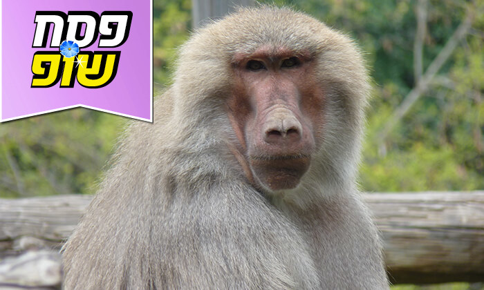 7 מקלט הקופים הישראלי - כניסה ופעילויות ביער בן שמן
