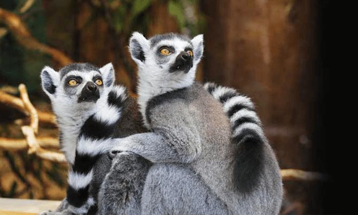3 גן החיות הלימודי בחיפה - כרטיס כניסה