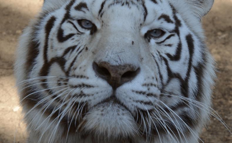 כניסה לאתוס גן החיות הלימודי