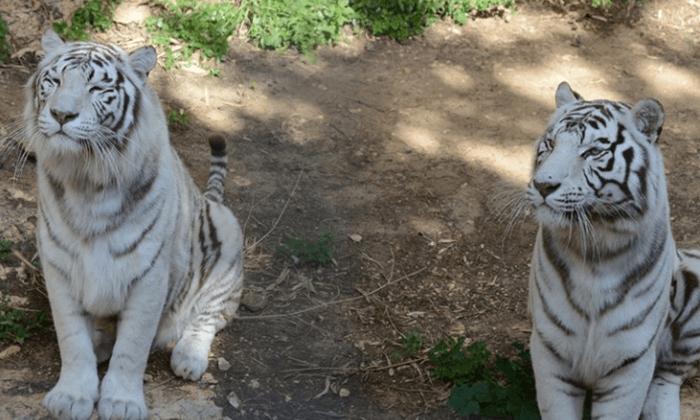 4 גן החיות הלימודי בחיפה - כרטיס כניסה