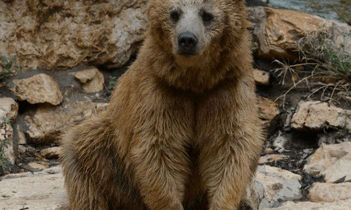5 גן החיות הלימודי בחיפה - כרטיס כניסה