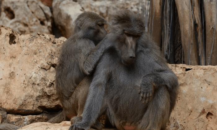 6 גן החיות הלימודי בחיפה - כרטיס כניסה