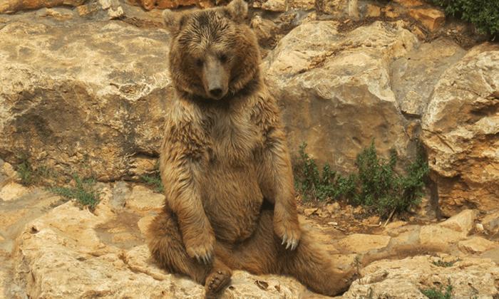 8 גן החיות הלימודי בחיפה - כרטיס כניסה