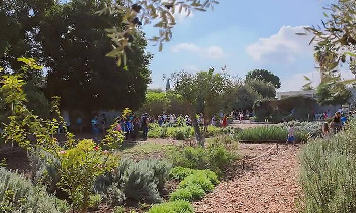 6 סיור וסדנת רוקחות טבעית במרכז המבקרים Lavido - זכרון יעקב, נהלל