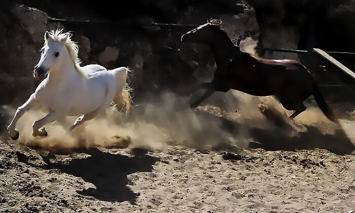 4 חוות הרי יהודה - קורס רכיבה על סוסים בחופש הגדול