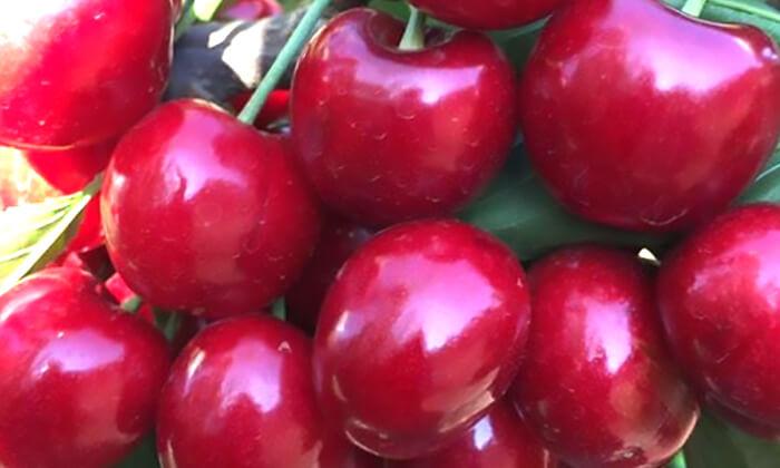 10 דיל חגיגת קיץ: קטיף דובדבנים ופירות יער בבוסתן של מוטי, עמק הבכא מול קיבוץ אלרום