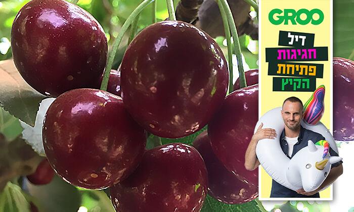 2 דיל חגיגת קיץ: קטיף דובדבנים ופירות יער בבוסתן של מוטי, עמק הבכא מול קיבוץ אלרום