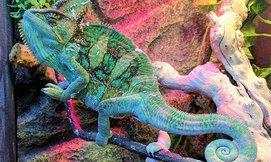 סיור במוזיאון הטבע התנ