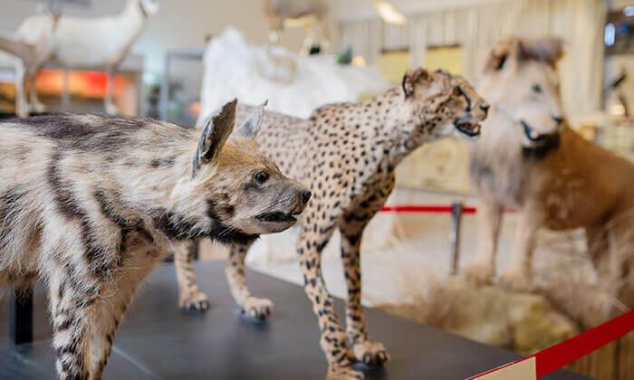 """7 מוזיאון הטבע התנ""""כי בית שמש - כרטיס לסיור"""