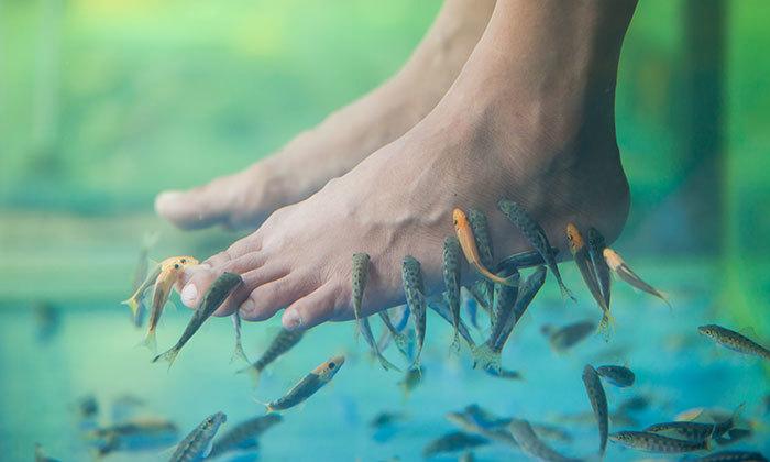 2 פדיקור דגים וכורסת עיסוי תלת מימד באקווה תרפי, אילת