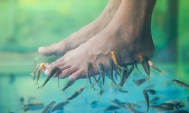 פדיקור דגים וכורסת עיסוי 3D