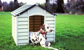 מלונה מרווחת לכלב