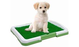 משטח אימון צרכים לכלבים