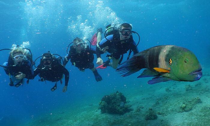 5 קורס צלילה באילת - אקווה סטאר