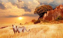 חדש! חופשת 5 כוכבים בטנזניה