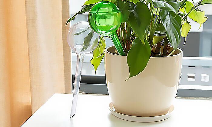 5 סט 4 בועות השקיה אוטומטיות לעציצים