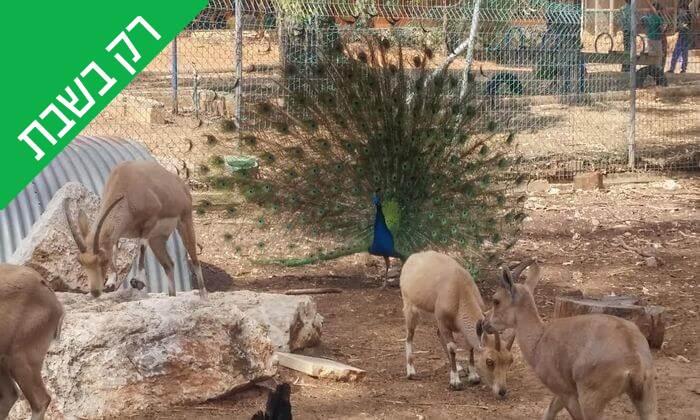 """2 כניסה לחווה החקלאית """"לגעת בטבע"""" בכפר הירוק"""