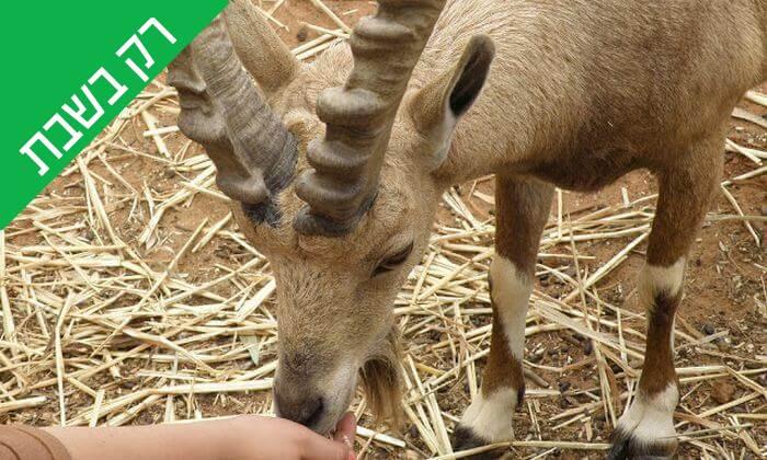 """4 כניסה לחווה החקלאית """"לגעת בטבע"""" בכפר הירוק"""