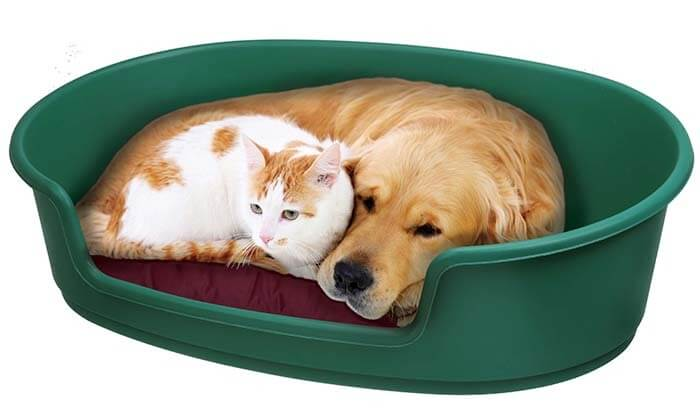 2 מיטה לכלב או לחתול