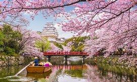 יפן בפריחת הדובדבן, כולל פסח