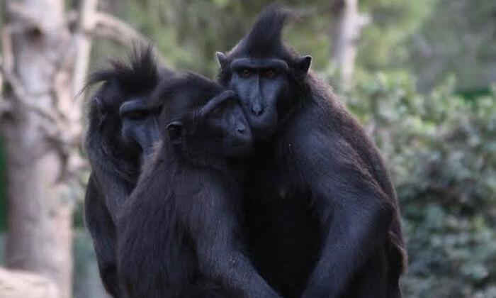 5 פארק הקופים ביער בן שמן