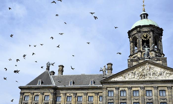 4 מגוון סיורים לבחירה באמסטרדם