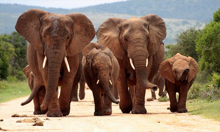 2 מאורגן לדרום אפריקה כולל ספארי בקרוגר - 10 ימים