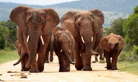 מאורגן לדרום אפריקה כולל ספארי