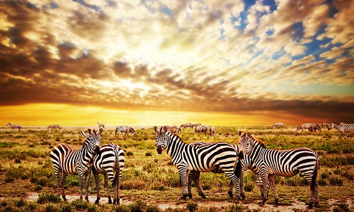 3 מאורגן לדרום אפריקה כולל ספארי בקרוגר - 10 ימים