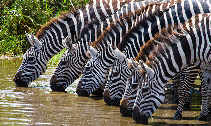 9 מאורגן לדרום אפריקה כולל ספארי בקרוגר - 10 ימים