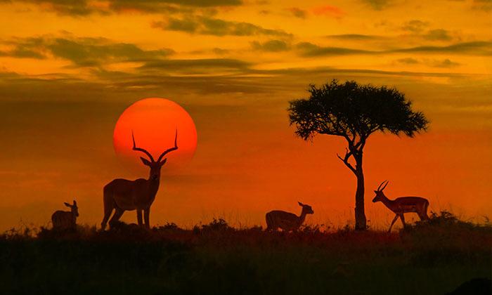 10 מאורגן לדרום אפריקה כולל ספארי בקרוגר - 10 ימים