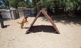 אילוף כלבים אצל נפתלי פרידמן