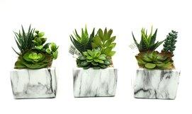 שלישיית צמחי אווירה