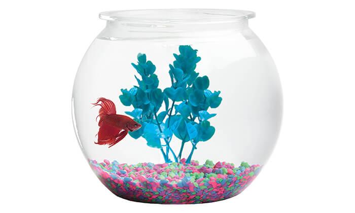 3 צנצנת זכוכית עם דג קרב