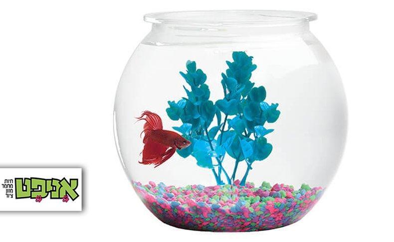 צנצנת זכוכית עם דג קרב