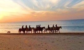 טיול רכיבה על סוסים בחוף דור