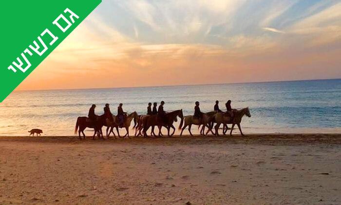 2 טיול רכיבה על סוסים לאורך חוף דור